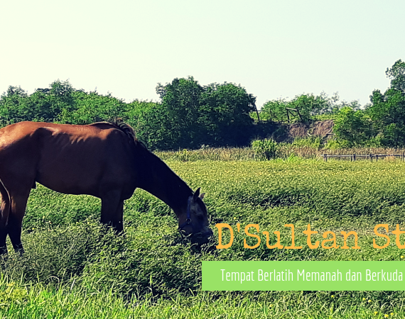 D'Sultan Stable : Tempat Berlatih Memanah dan Berkuda di Palembang