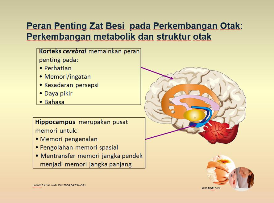 Pentingnya Zat Besi untuk Perkembangan Otak