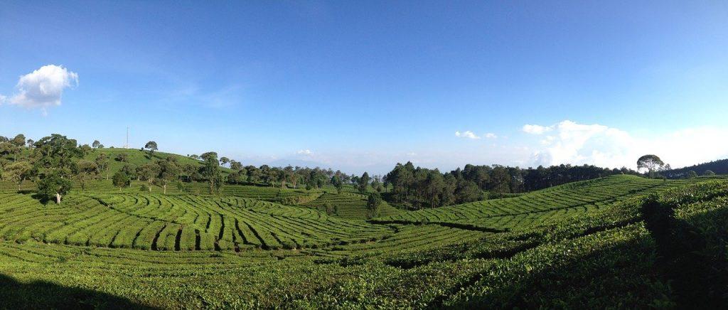 wisata alam ke kebun teh, cocok juga untuk seluruh anggota keluarga