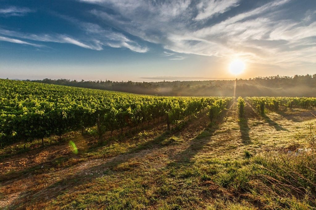 Mendapatkan Sinar Matahari adalah salah satu cara agar tetap fit dan berenergi